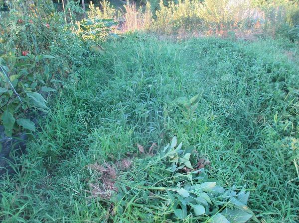 また雑草に埋もれる