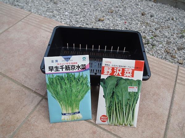トレーに野沢菜の種をまく(苗作り)