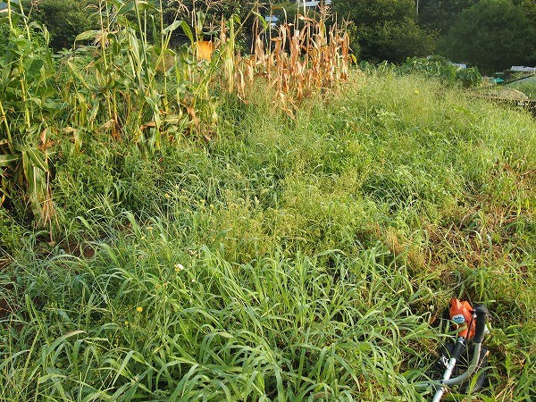 やっかいな畑の雑草