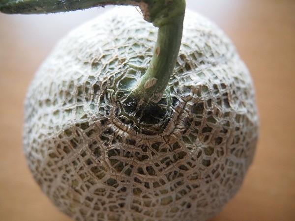 収穫したサンライズの結果枝