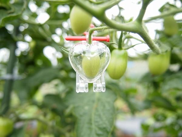 ミニトマトのアイコにハートのトマトを取りつけ