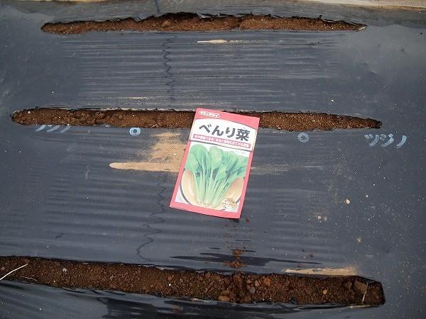 べんり菜の種