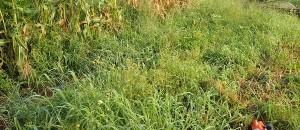 畑の雑草対策まとめ