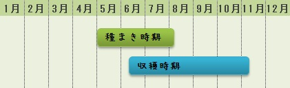 空芯菜の栽培時期