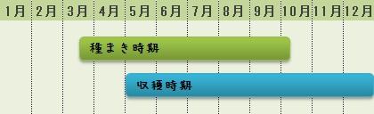 ミズナの栽培カレンダー