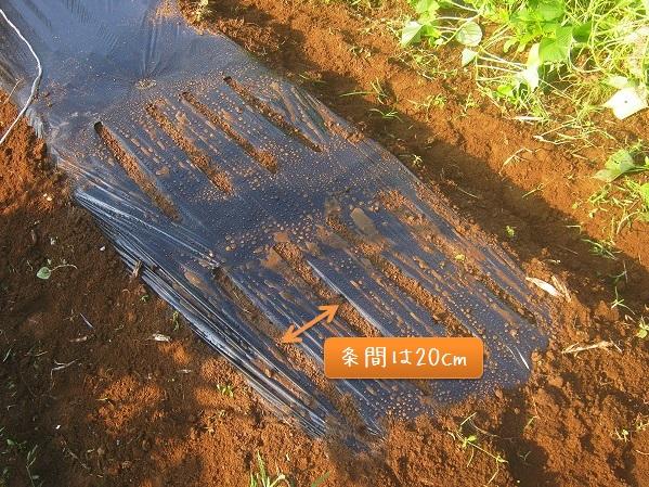 小松菜の条まき