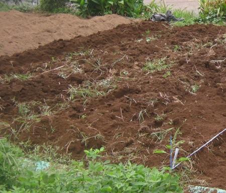 雑草をとって耕した畑