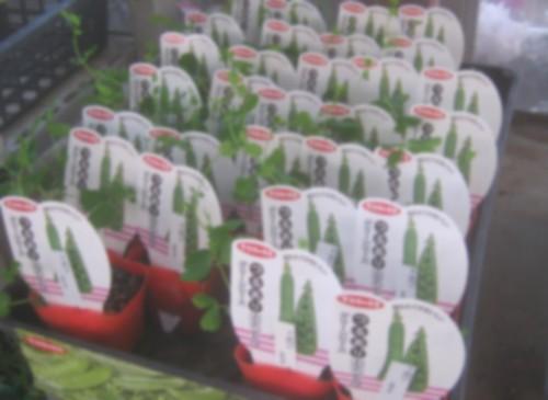 店頭に並んだ野菜の苗