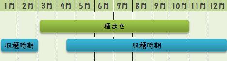 小松菜の栽培時期