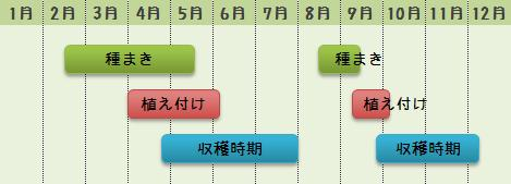 サンチュの栽培時期