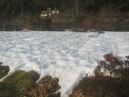 雪に埋もれた畑