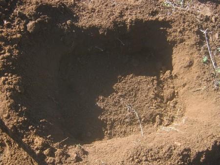 並べた大根に土を被せる