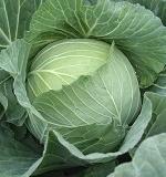 葉茎野菜の育て方一覧