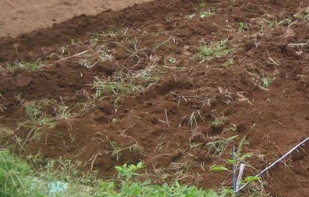 耕したばかりの畑