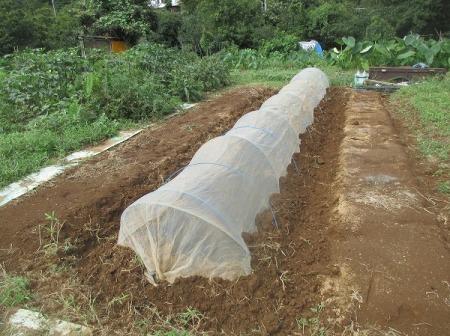 病害虫対策に防虫ネット
