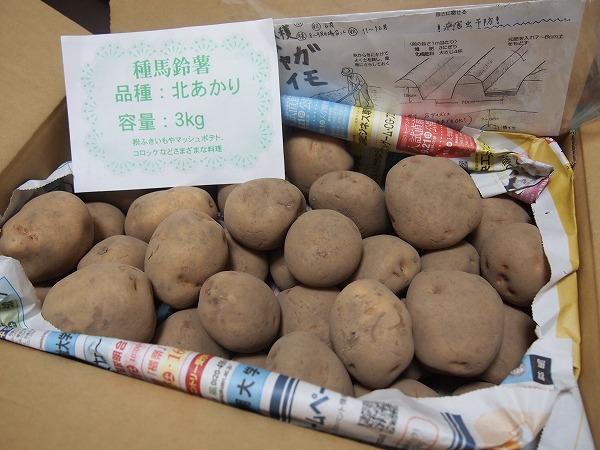 通販で購入したジャガイモの種芋
