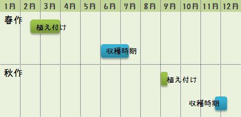 ジャガイモの栽培時期