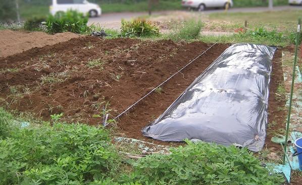 雑草や石を取り除く