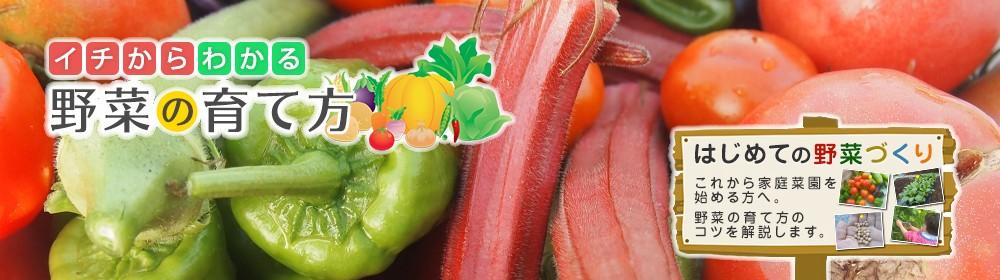 イチからわかる野菜の育て方