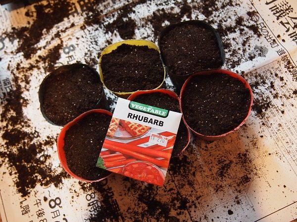 ルバーブの種まき