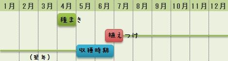 ルバーブの栽培時期