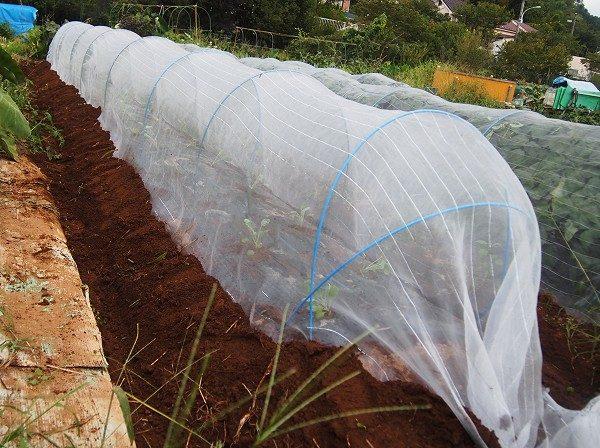 防虫ネットでトンネルして害虫を防ぐ