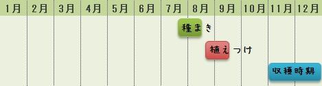 カリフラワーの栽培時期
