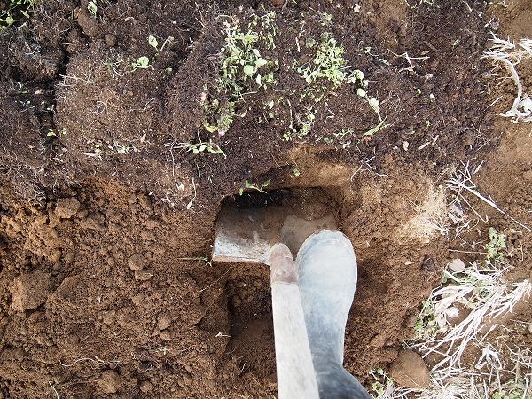スコップやクワで表面と裏の土をひっくり返す