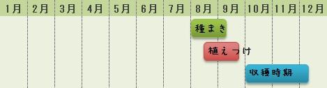 ミニ白菜の栽培時期