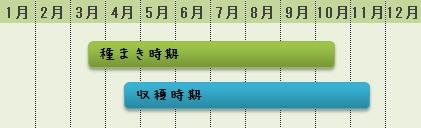 葉大根の栽培時期