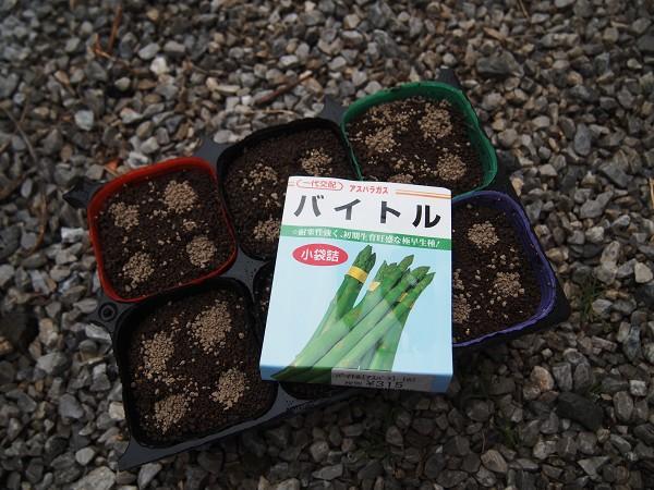 アスパラガスの種まき