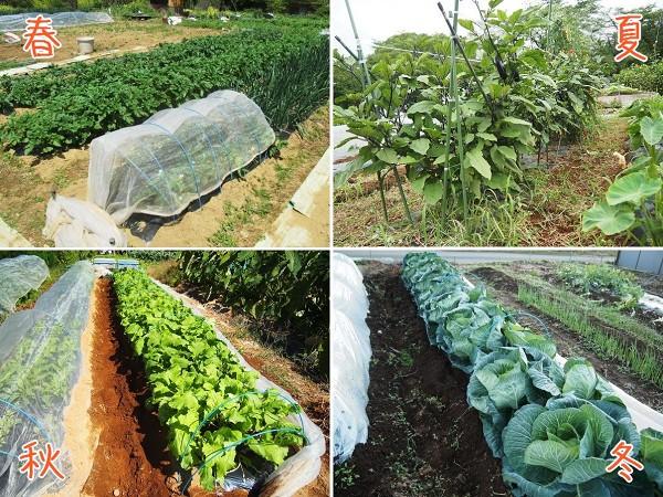 家庭菜園の四季