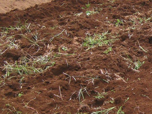 雑草や石を取り除いたところ