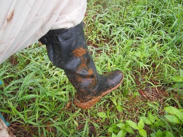 農業用長靴 隼人を履いて農作業をした後