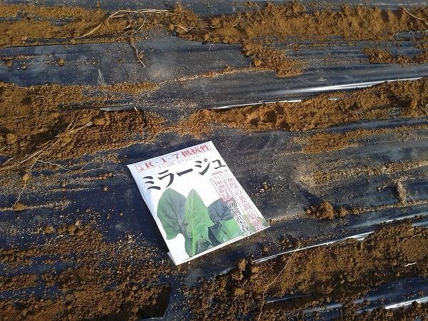 ホウレンソウのミラージュの種まき