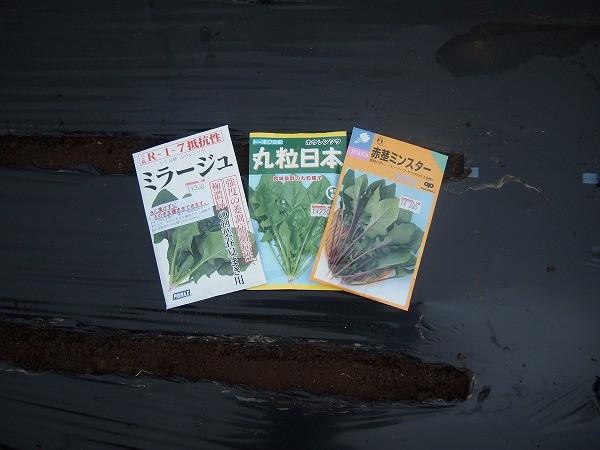 ホウレンソウは3種