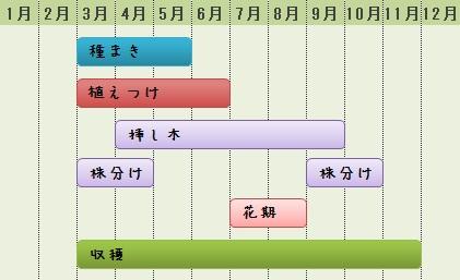 ミントの栽培カレンダー