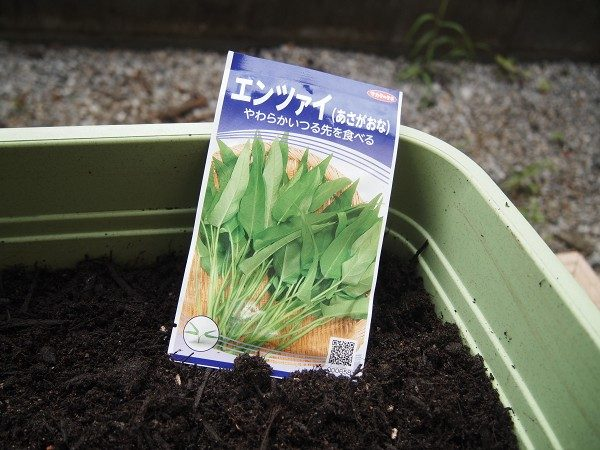 空芯菜の種