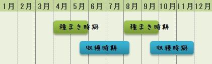シュンギクの栽培カレンダー