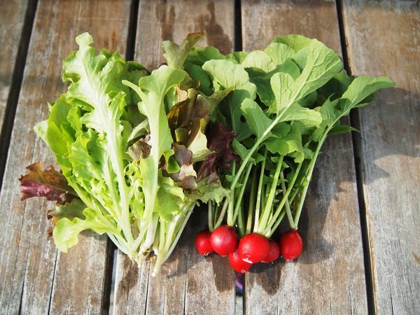プランターで育てた野菜