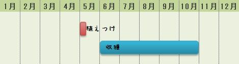 ミニピーマンの栽培時期