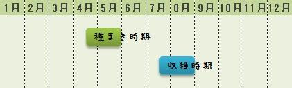トウモロコシの栽培時期