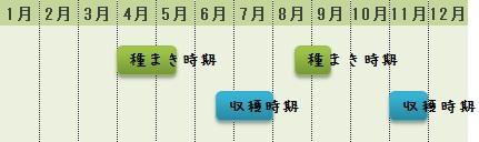 ミニ大根の栽培時期