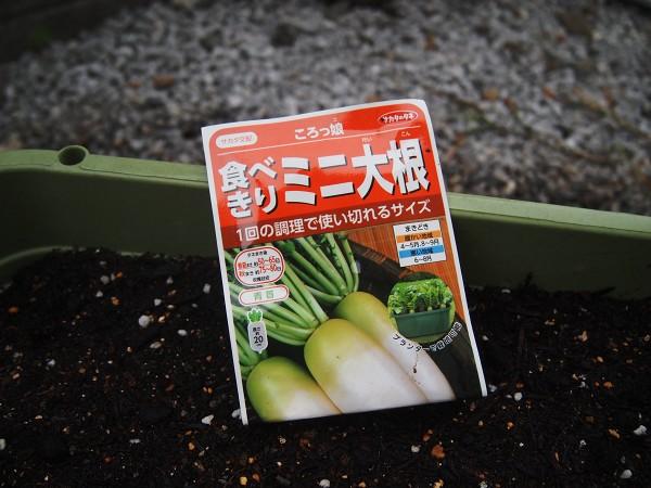 ミニ大根の種