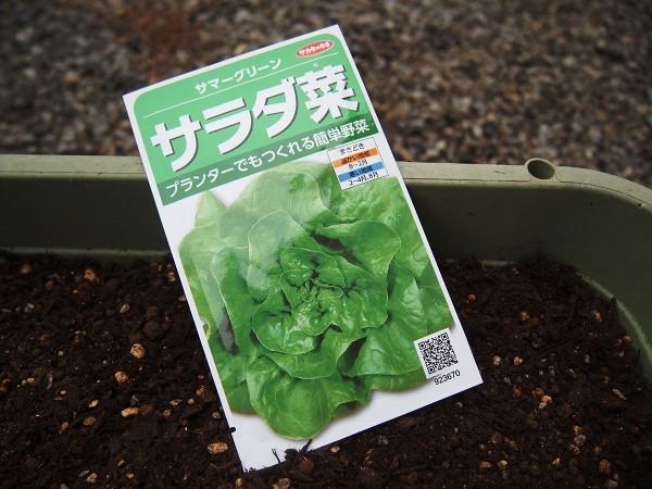 サラダ菜の種