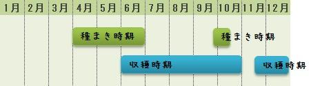 コリアンダー(パクチー)の栽培時期