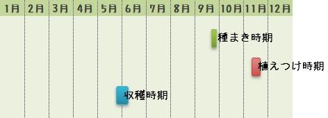 タマネギの栽培時期