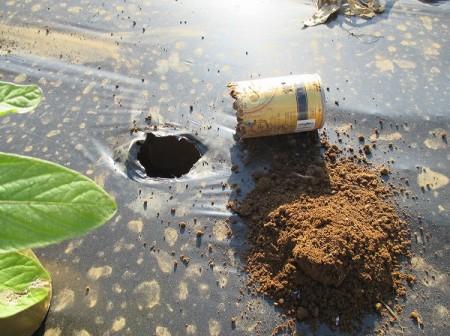 植えつけ位置にあけた穴