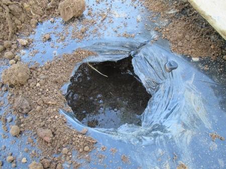 植え穴に潅水