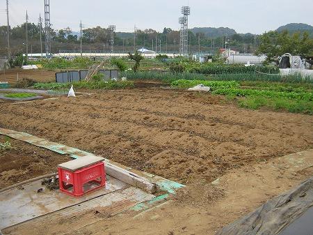 広い畑で家庭菜園